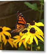 Monarch At Rest Metal Print