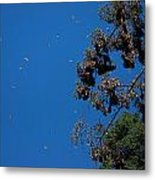 Monarch Butterflies Flying Metal Print