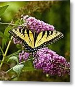 Monarch Butterfly 2 Metal Print