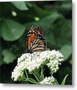 Monarch Butterfly 45 Metal Print