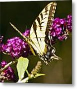 Monarch Butterfly 5 Metal Print