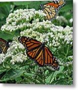 Monarch Butterfly 54 Metal Print