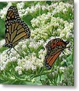 Monarch Butterfly 56 Metal Print
