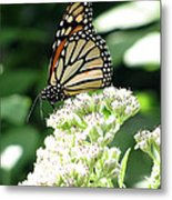 Monarch Butterfly 58 Metal Print