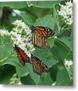 Monarch Butterfly 63 Metal Print