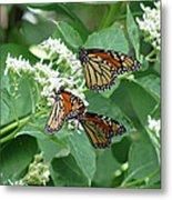 Monarch Butterfly 65 Metal Print