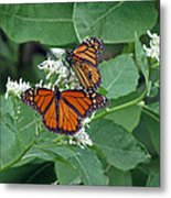 Monarch Butterfly 68 Metal Print