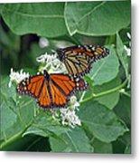 Monarch Butterfly 69 Metal Print