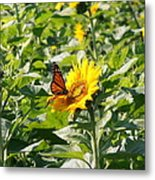 Monarch Butterfly And Guest Metal Print