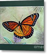 Viceroy Butterfly By George Wood Metal Print