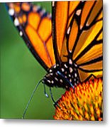 Monarch Butterfly Headshot Metal Print