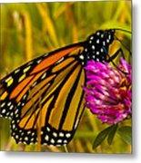 Monarch Butterfly On Flower Metal Print