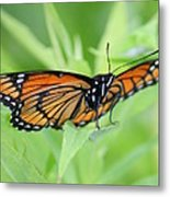 Monarch Butterfly Rocking Chair Metal Print