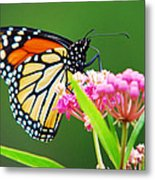 Monarch Butterfly Simple Pleasure Metal Print