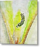 Monarch Caterpillar - Digital Watercolor Metal Print
