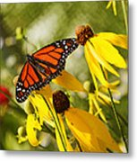 Monarch Days 1 Metal Print