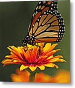 Monarch Metal Print