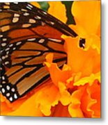 Monarch In The Marigold Metal Print