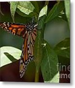 Monarch In The Shade Metal Print