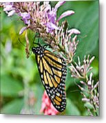 Monarch Ins 15 Metal Print