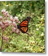 Monarch Of The North Metal Print