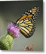 Monarch Of The Wild Metal Print
