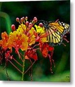 Monarch On Pride Of Barbados Metal Print