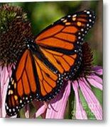 Monarch On Purple Coneflower Metal Print