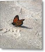 Monarch On The Beach Metal Print