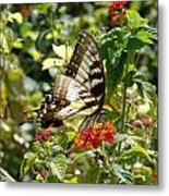 Monarch Pause Metal Print