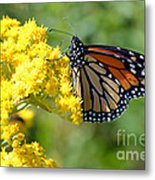 Monarch Resting Metal Print