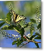 Monarch Tranquility Metal Print