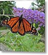 Monarch Under Flowers Metal Print