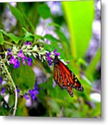 Monarch With Sweet Nectar Metal Print