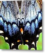 Monarchs Blue Glow Metal Print by Kim Galluzzo Wozniak