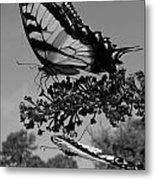 Swallotail In Black And White Metal Print