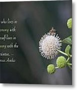 Monday Motivation - Bee On Buttonbush Metal Print