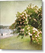 Monet's Tree Metal Print