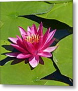 Monet's Waterlily Metal Print