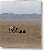 Mongolia Horses Metal Print