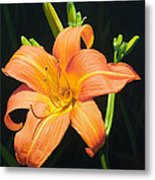 Monikas Orange Lily Metal Print