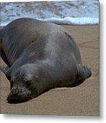 Monk Seal Sunning Metal Print by Brian Harig