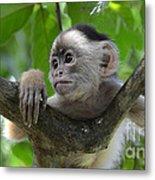 Monkey Business Metal Print by Bob Christopher