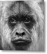 Monkey Eyes Metal Print