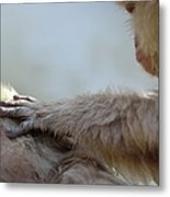 Monkey Head Massage Metal Print