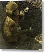 Monkey Metal Print by Jennifer Burley
