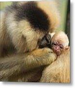 Monkey Mother Metal Print