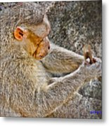 Monkey Playing With Tail Metal Print