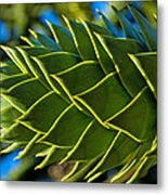 Monkey Puzzle Tree D Metal Print