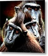 Monkey What Are You Looking At Metal Print